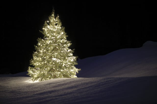 Where can you get a Christmas tree for 10p? - AOL UK Money