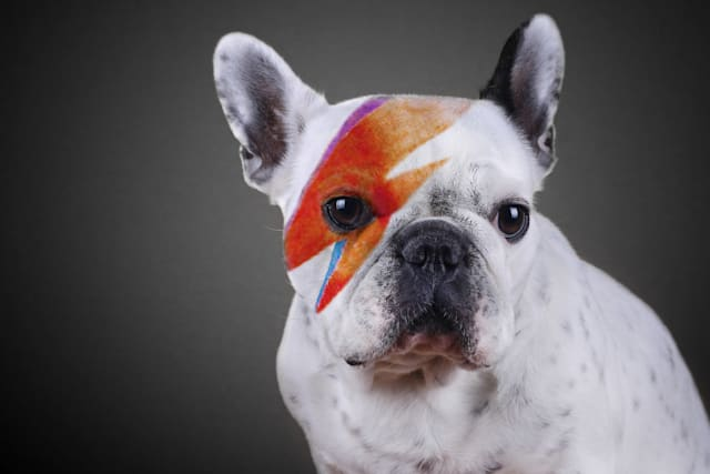 David Bowie dog