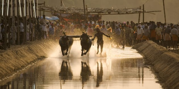 Karnataka Assembly Passes Bill To Legalise Kambala