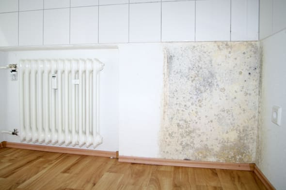 how to stop mould growing back