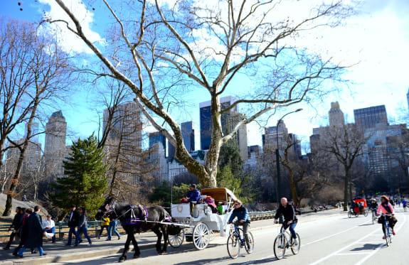 Sunny Day in New York