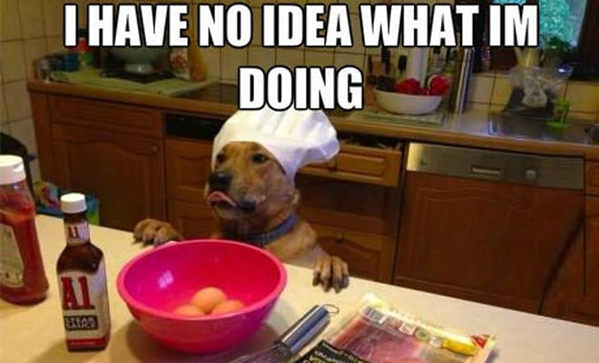 Dog baking in kitchen