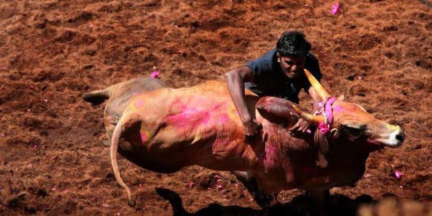 Jallikattu row: Watch: Villagers make 'black rangoli' against PETA
