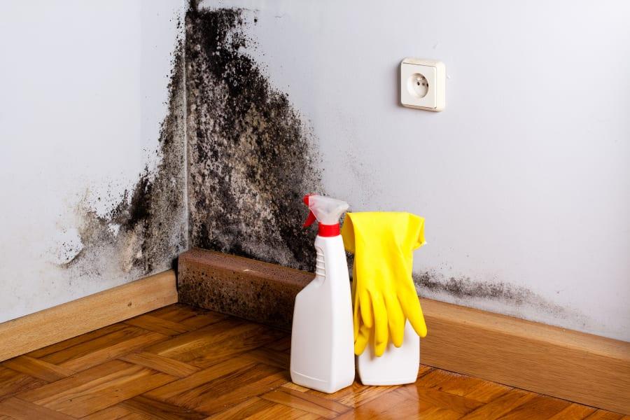 C mo eliminar el moho de tu hogar - Como eliminar el moho ...