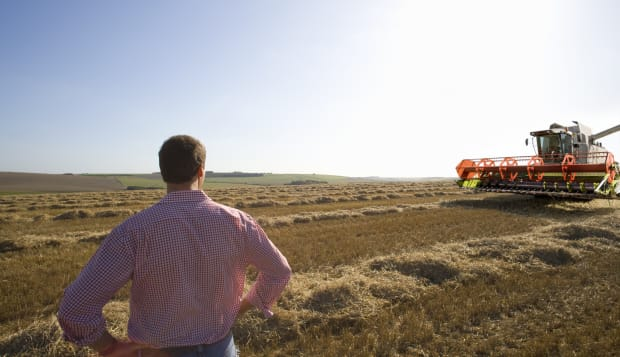 Farmer looking at harvester