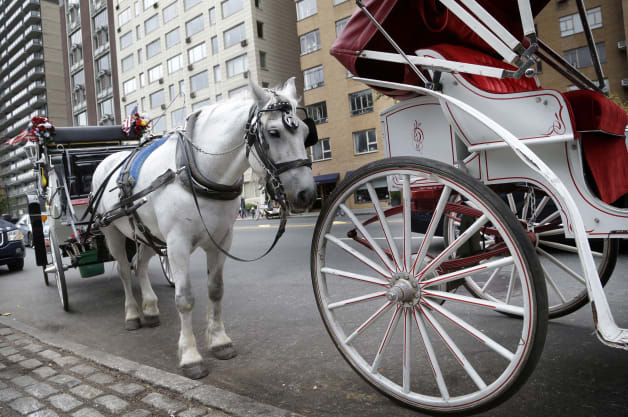 Horse Carriage Politics
