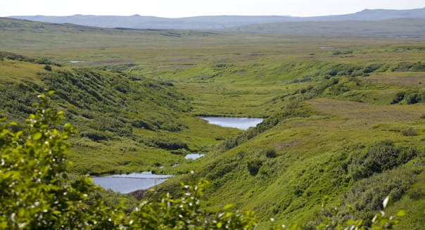 Scenic overview of beaver ponds in a tributary to Upper Talarik Creek, Pebble Deposit in background, Southwest Alaska