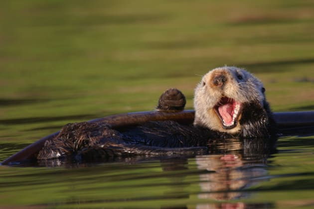 Forestry worker chased by otter on country road