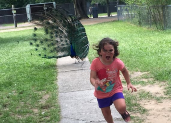 Photo of girl running from peacock goes viral