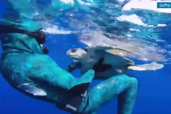 Sea turtle hugs er after being cut free from fishing net video