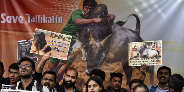 Image result for youth and official supporting jallikattu