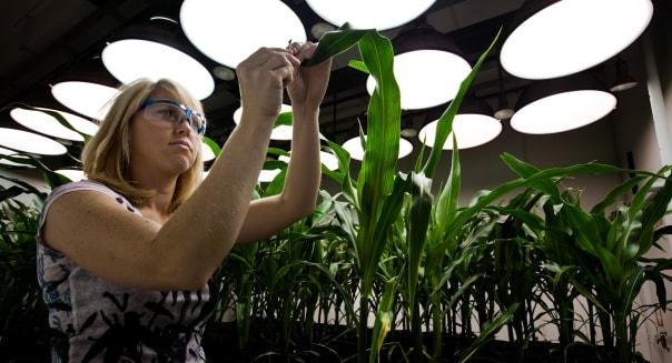 Inside the Greenhouses of Monsanto