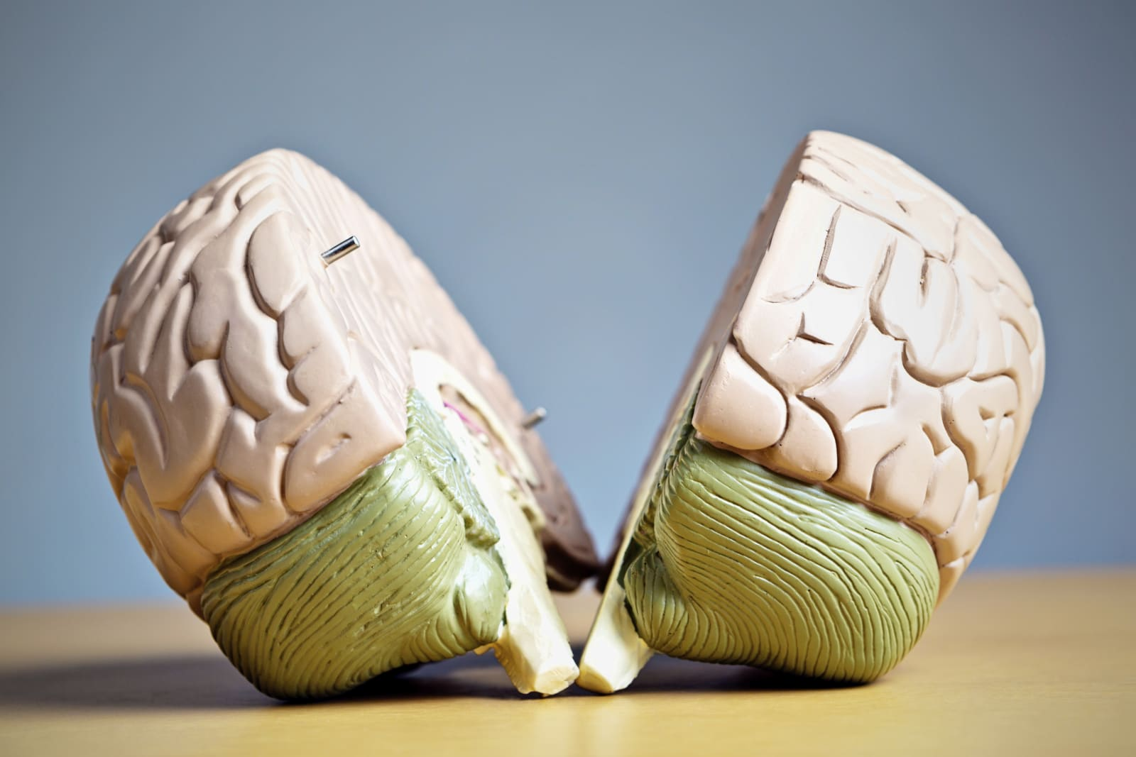 The two halves of a medical model of a human brain. Metaphor for indecision or mental illness.