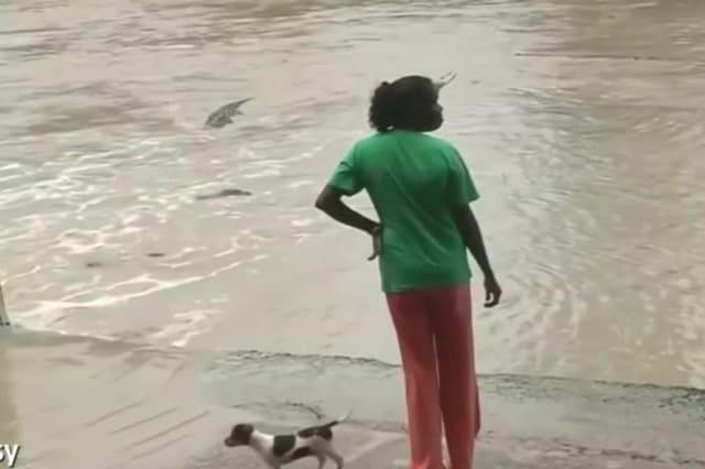 IMPRESIONANTE: La reacción de esta a un cocodrilo frente a su cachorro!