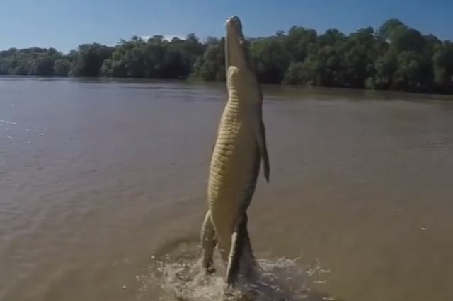 Terrifying video shows crocodile's true strength