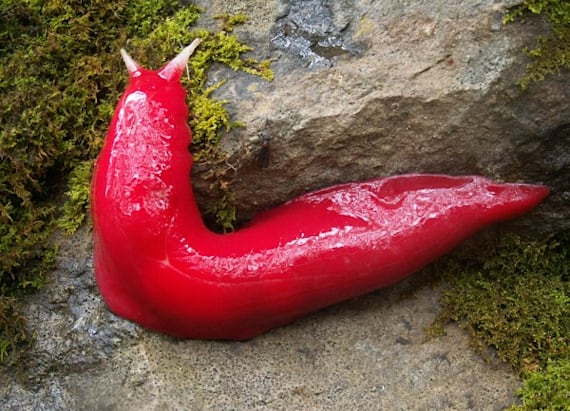 Bright pink slugs can only be found in one place