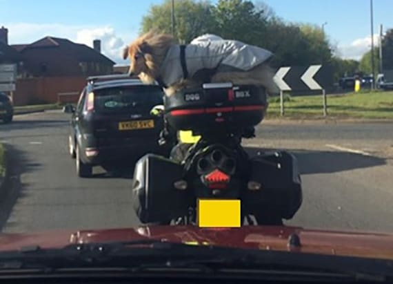 Motorbike-riding dog creates a stir