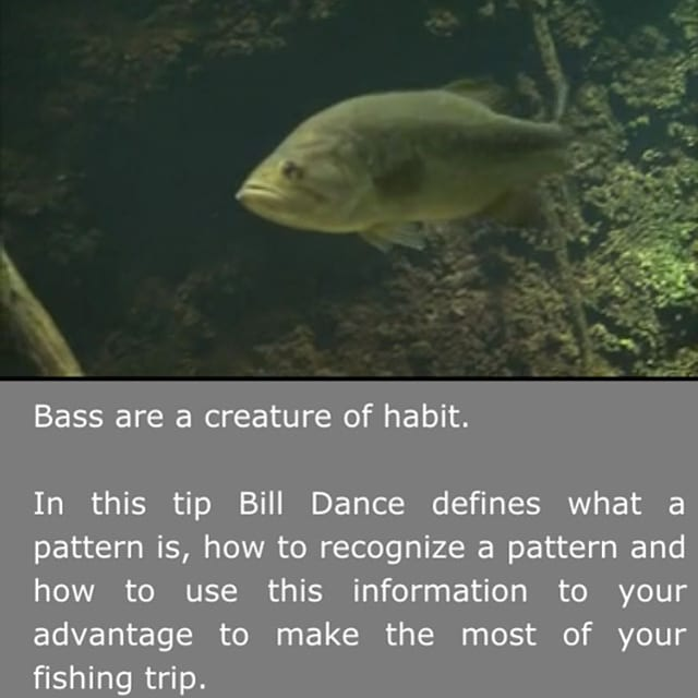 Tips and techniques from master bass angler bill dance for Bill dance fishing