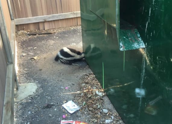 Firefighter reads to trapped skunk during rescue