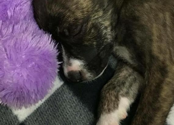 Officer makes heartwarming move after rescuing pup