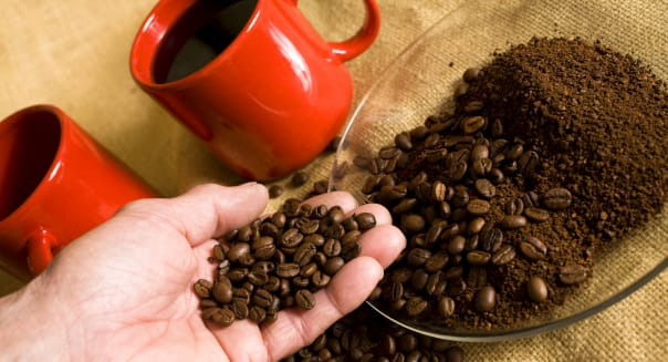Hand holding coffee beans with beans and ground beans in plate.  Two mugs of coffee in background.