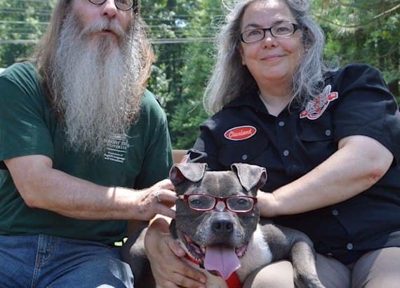 Glasses-wearing pit has been adopted in viral story