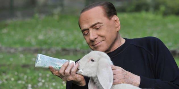 Berlusconi salva cinque agnelli pasquali, adottati ad Arcore