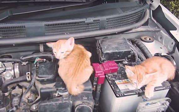 出かける前に、猫バンバンやってますか!? 今年も日産が「#猫バンバン」プロジェクト実施中!!