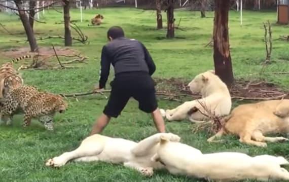 突進してくるヒョウの攻撃から男性を守ったのは・・・トラ!?
