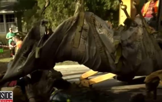 【びっくり!】排水溝に450キロのマナティが発見され救助活動が行われる