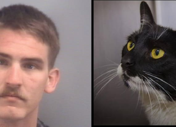 Man sentenced for strangling cat to death