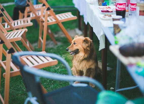 How to host the perfect end-of-summer soiree