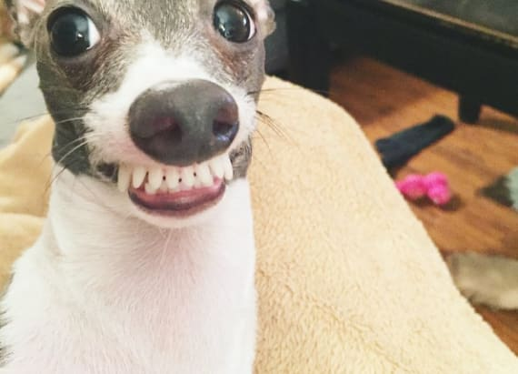 This may be the world's most awkward dog