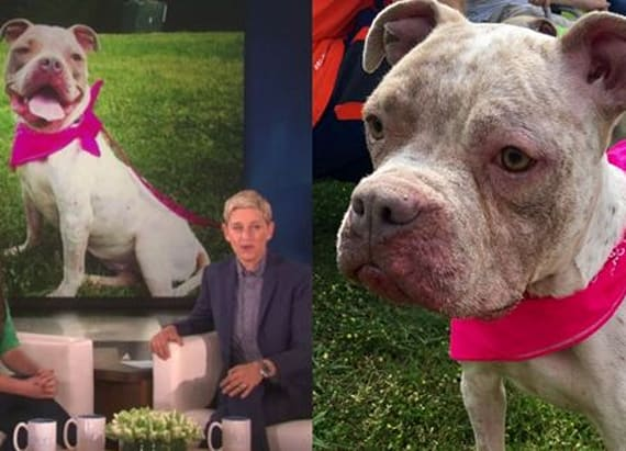 Ellen gives teacher huge sum to help with sick dog