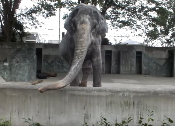 'World's saddest elephant' tragically dies at 69