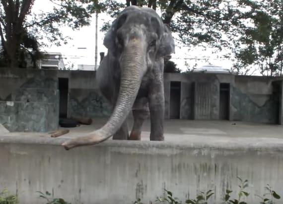 'World's saddest elephant' tragically dies at 69