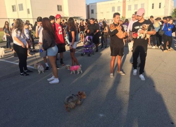 Senior prank turns high school into dog park