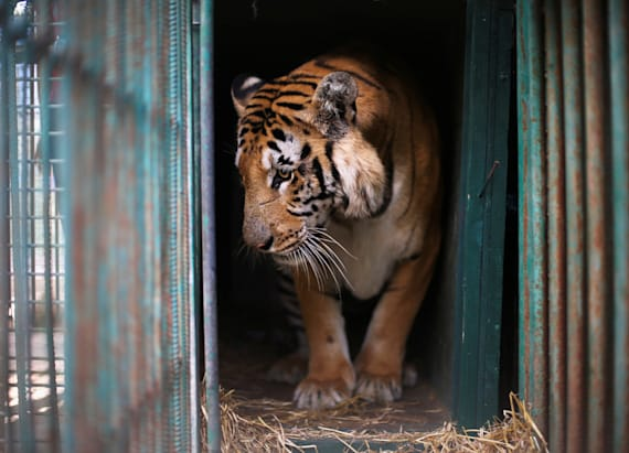 Rescued animals from Gaza zoo find new homes