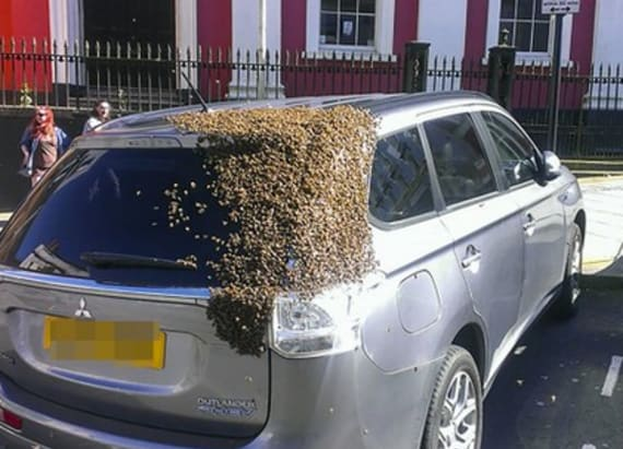 20K bees followed a car to find their queen