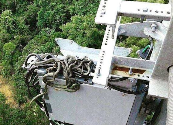 Engineer spots snakes wrapped around 125-foot tower