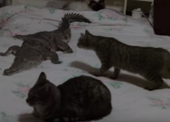 3 cats and a crocodile snuggle up in a single bed