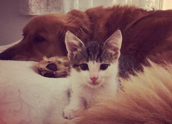 Family dog adopts kitten rejected by siblings