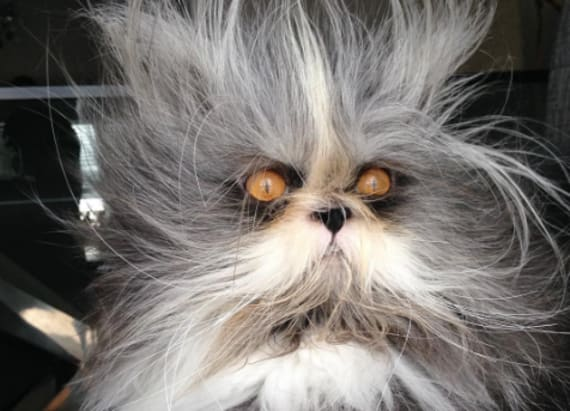 This cat is having a crazier hair day than you