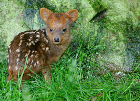 This rainforest is full of miniature creatures
