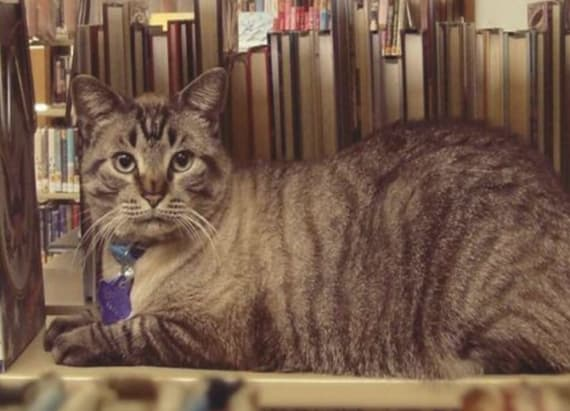 Cat is about to lose his library job and home