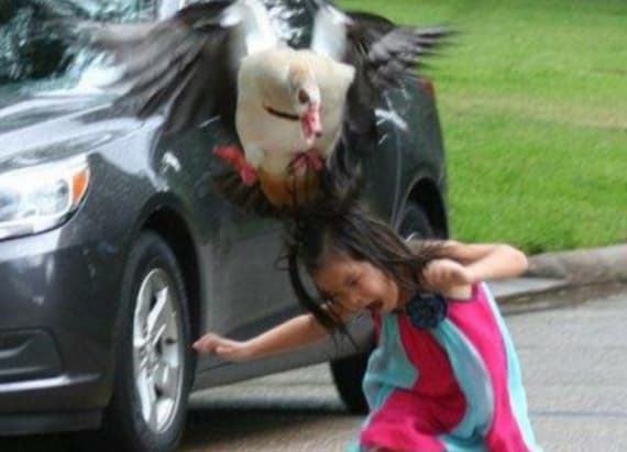 Little girl gets attacked by a mama goose