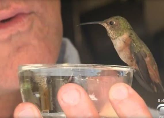 Hummingbird and dog who saved her are inseparable
