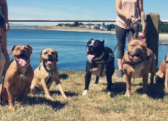 7 pit bulls attacked by unexpected creature