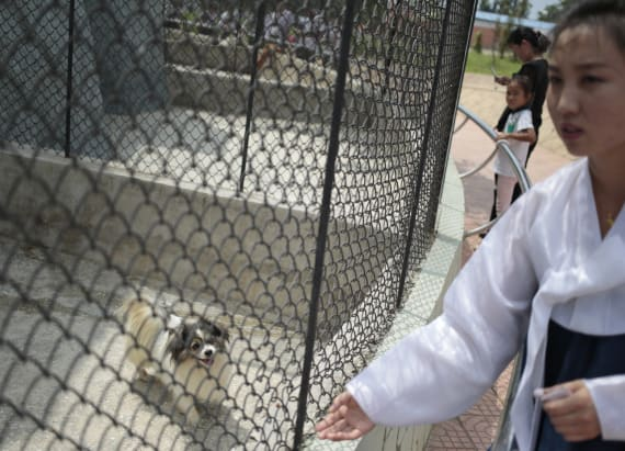 North Korean national zoo has a surprising exhibit