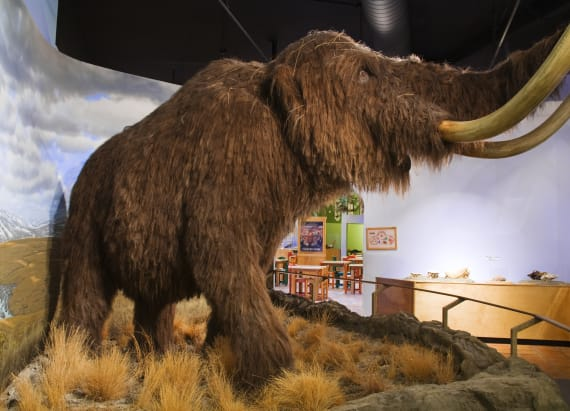 Scientists say the woolly mammoth will return